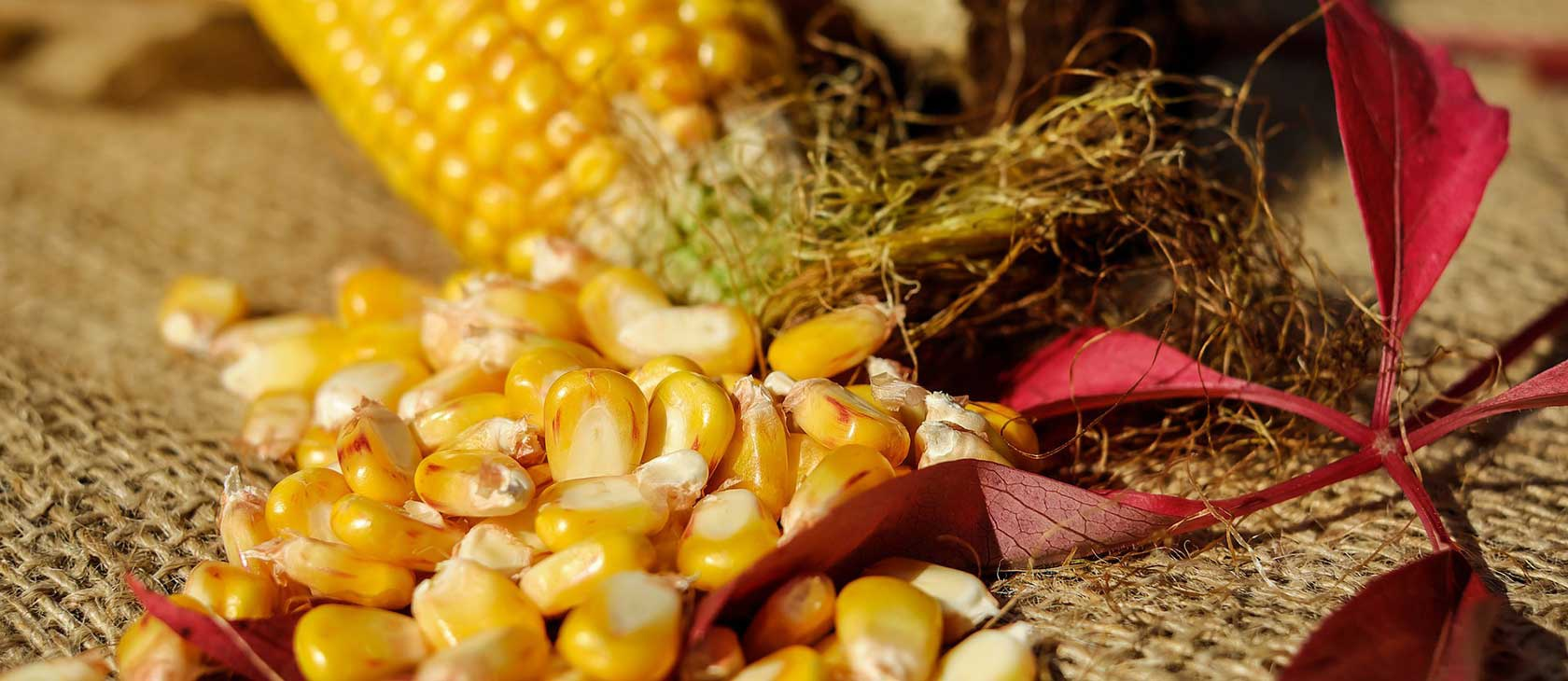 Corn subsidies at root of U S -Mexico immigration problems | Acton