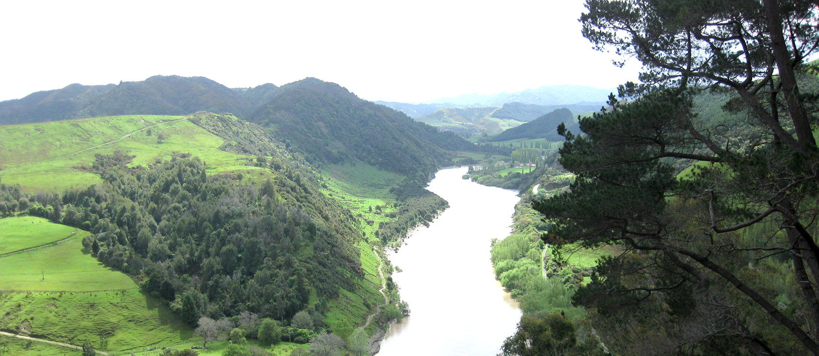 Looking down the verdant Whanganui River in New Zealand